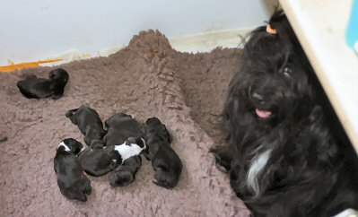 Rhoni and Puppies 11th March 2011